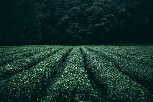 Защо финансови експерти съветват да направите инвестиция в земеделска земя?